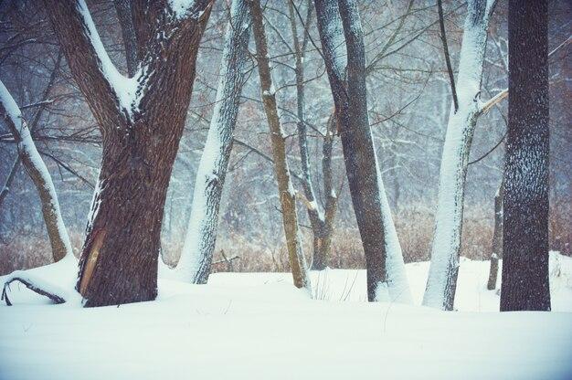 Fundo desfocado com árvores, queda de neve
