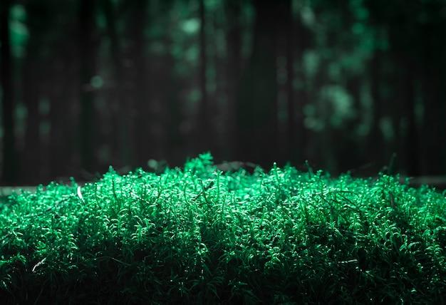 Fundo desfocado com grama ultra verde com floresta de pinheiros borrada com espaço de cópia para o texto