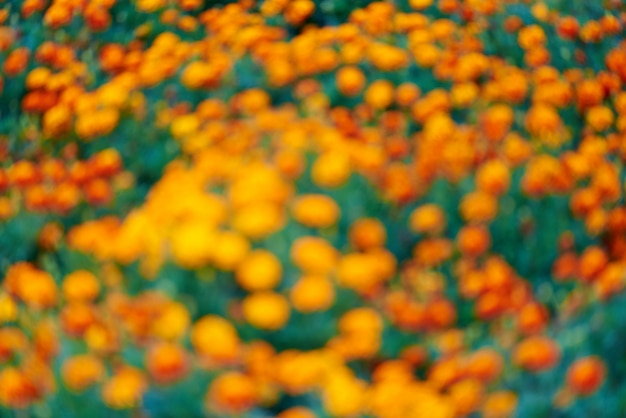 Fundo desfocado de flores na grama verde.
