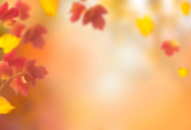 Fundo desfocado desfocado de outono pode ser usado para design