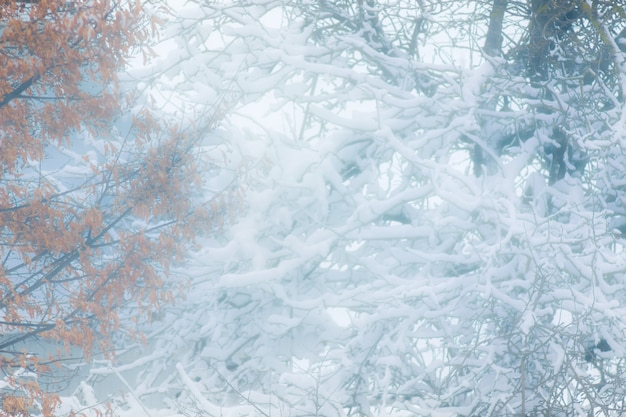 Fundo desfocado inverno para o projeto. árvores durante nevasca_