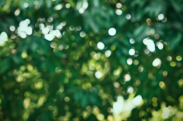 Fundo desfocado tropical verde com bokeh
