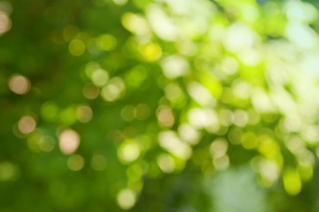 Fundo difuso nas cores verde e branco