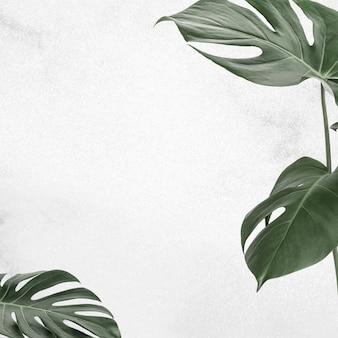 Fundo do banner da folha da moldura da folha monstera
