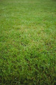 Fundo do campo de grama verde