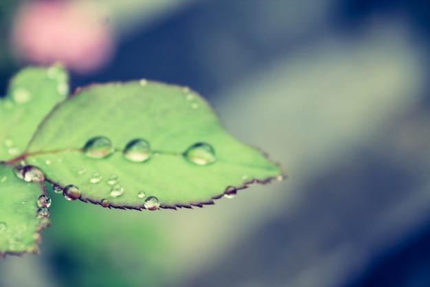 Fundo do close up da chuva macro molhado