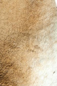 Fundo do close up da pele de canguru.