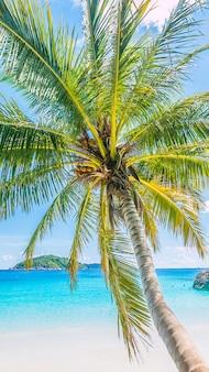Fundo do mar de coco paraíso do caribe