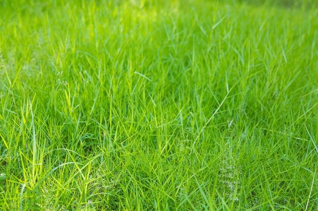 Fundo do prado com grama verde