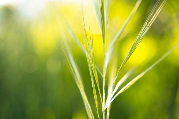 Fundo do prado no horário de verão. flor do campo de primavera sazonal. detalhe de folha verde em um campo da natureza. recursos naturais. meio ambiente e preocupação com o conceito de natureza. estilo de vida saudável verde.