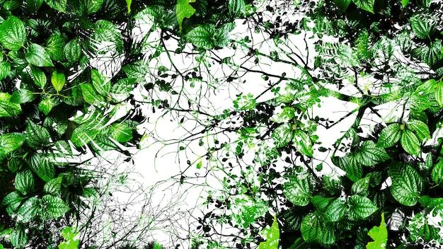 Fundo do sumário da folha verde tropical.