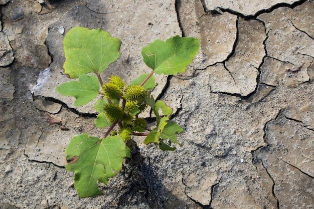 Fundo e textura de lama seca, solo e terra