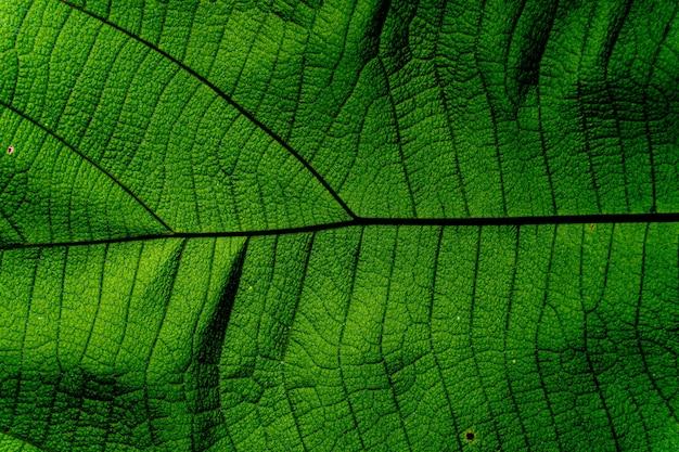 Fundo e textura de textura de folha verde
