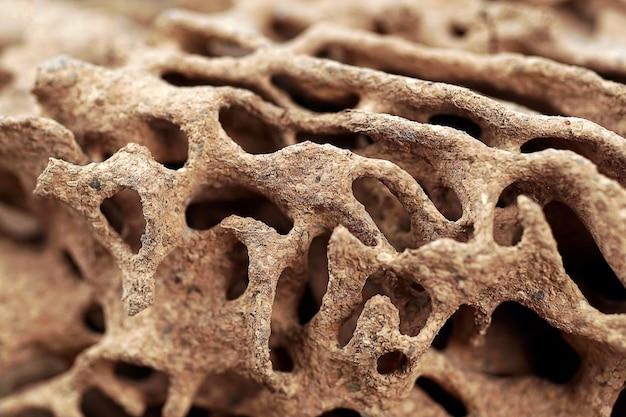 Fundo e textura do ninho de cupins na parede de madeira