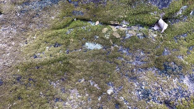 Fundo e textura verde musgo