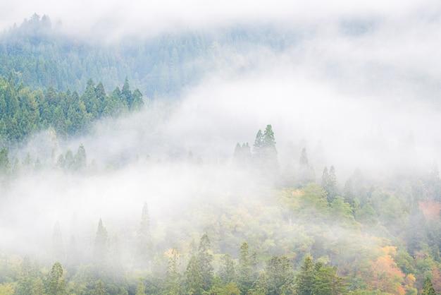Fundo enevoado de floresta de pinheiros