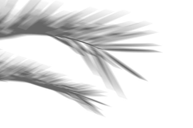 Fundo exótico abstrato de verão de folhas de palmeira de sombras em uma parede branca. branco e preto para sobreposição