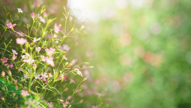 Fundo flor brilhante. florescendo no prado
