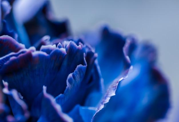 Fundo floral abstrato flor de cravo azul macro flores pano de fundo para design de marca de férias
