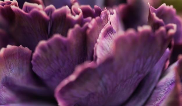 Fundo floral abstrato flor de cravo roxo macro flores pano de fundo para design de marca de férias
