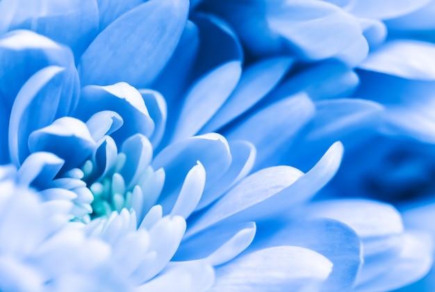 Fundo floral abstrato flor de crisântemo azul macro flores pano de fundo para design de marca de férias