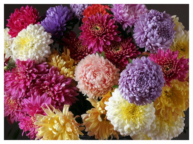 Fundo floral close-up de ásteres e crisântemos.