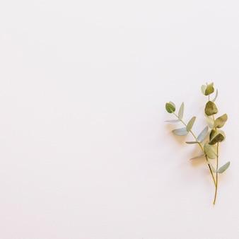 Fundo floral com filial