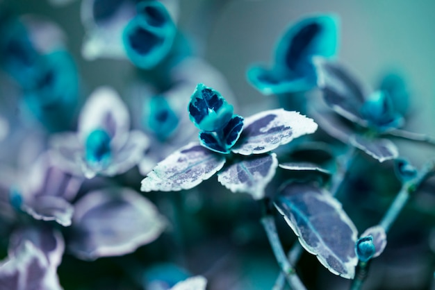 Fundo floral desfocado com folhas
