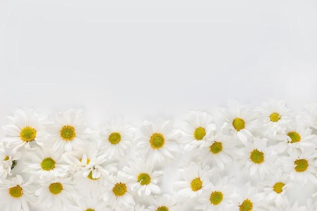 Fundo floral. flores de margarida de primavera e verão plana leigos com espaço de cópia. postura plana.