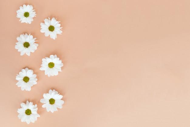 Fundo floral margarida branca em espaço de cópia de fundo bege