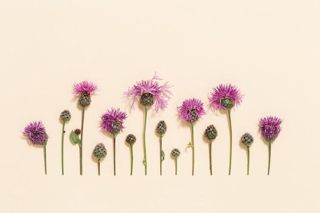Fundo floral natural mínimo com flores silvestres de verão e grama padrão botânico