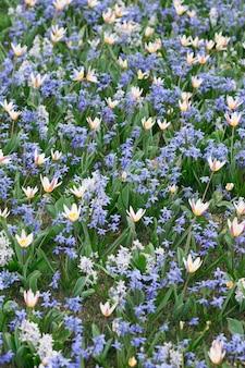 Fundo floral natural