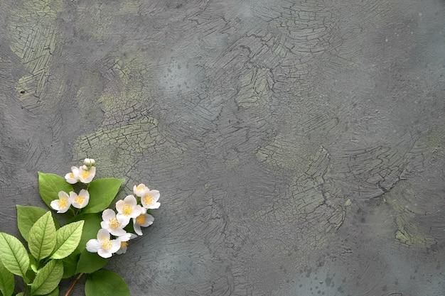 Fundo floral verão com flores frescas de philadelphus, também conhecido como mock-orange