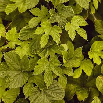 Fundo floral verde