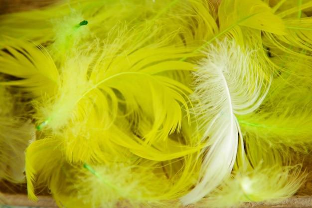 Fundo fofo penas amarelas