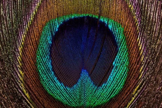 Fundo horizontal do close-up brilhante e colorido das penas do pavão.