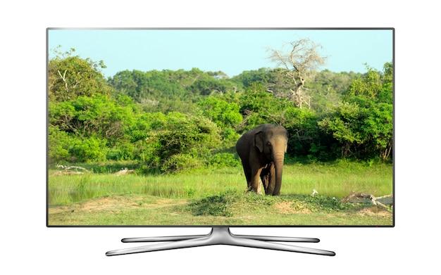 Fundo isolado de smart tv com elefante selvagem na tela