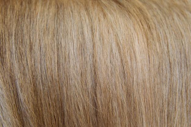 Fundo macio do cabelo de cão dos carneiros da textura do cotão.