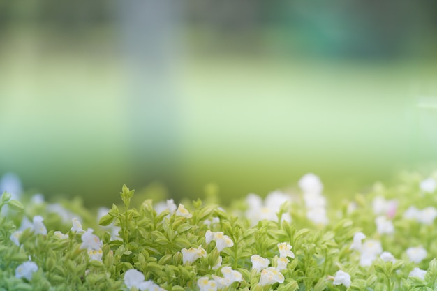 Fundo macio floral verde