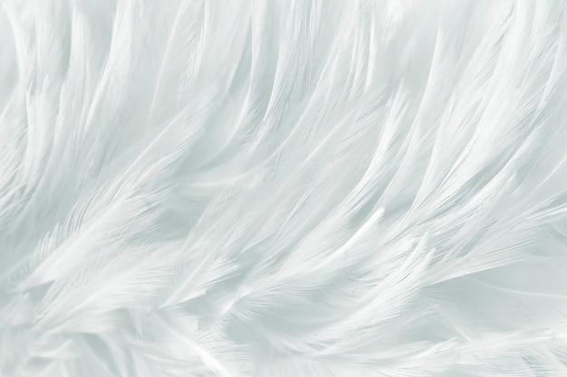Fundo macio penas brancas