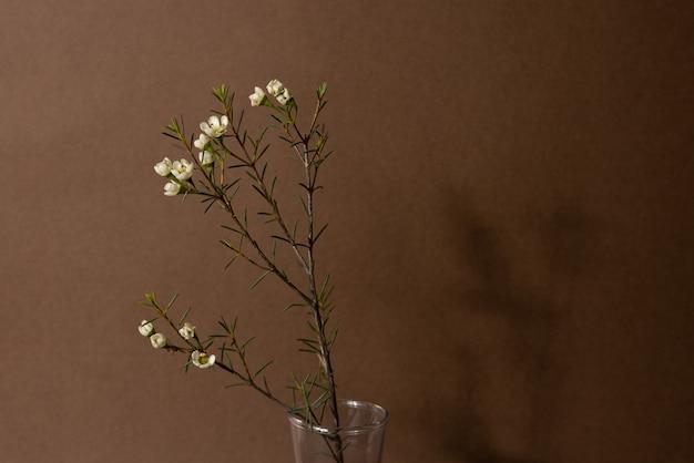 Fundo minimalista com chamelaucium ou flor de cera, flor tenra, flor de violeta, camada plana, vista lateral