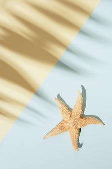 Fundo mínimo de verão com sombra de folha de palmeira e estrela do mar