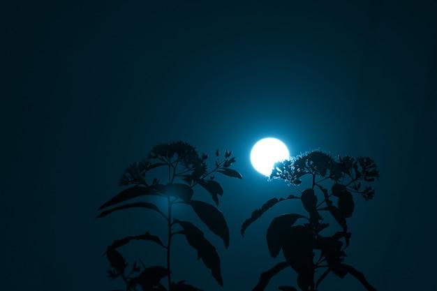 Fundo místico do céu noturno com lua cheia, nuvens e estrelas.