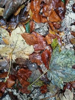 Fundo molhado das folhas de outono