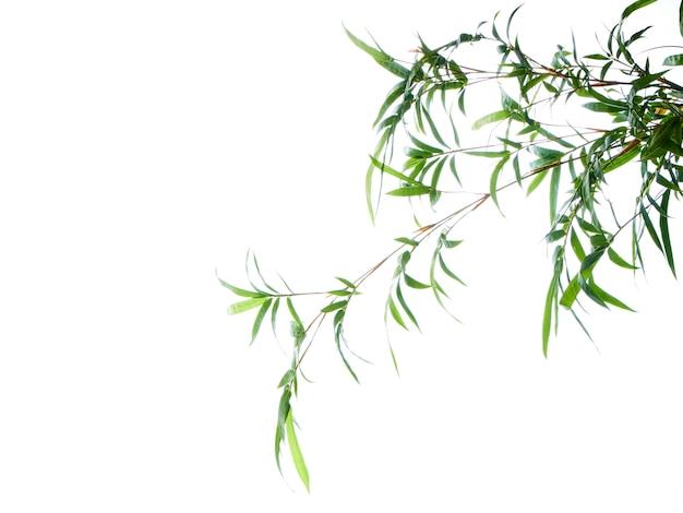 Fundo natural asiático com bambu