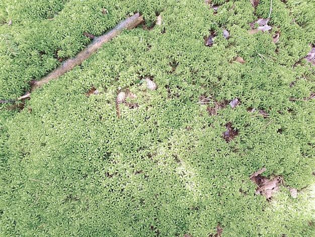 Fundo natural com musgo fresco e galhos. conceito de plano de fundo, natureza.