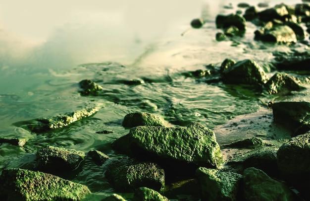 Fundo natural da água do rio com pedras cobertas de musgo, problemas ecológicos