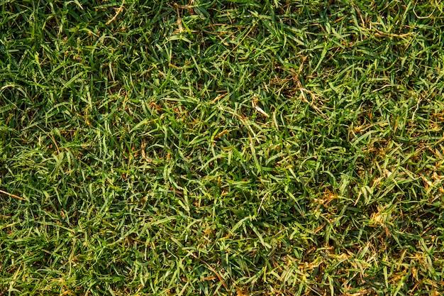 Fundo natural da grama verde com gota de orvalho
