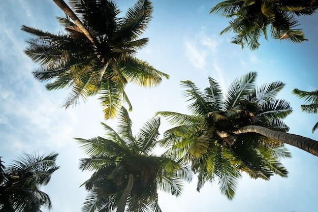 Fundo natural da ilha de boracay com coqueiros, folhas de árvores, céu azul e nuvens, viagens de férias. folhas de palmeira longas no fundo do céu azul com nuvens brancas. sob as palmas das mãos. vista de baixo