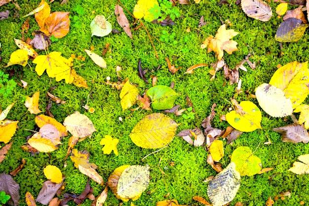 Fundo natural de folhas de outono. belo amarelo laranja verde vermelho marrom outono natureza horizontal fundo bonito. folhagem colorida em musgo verde.